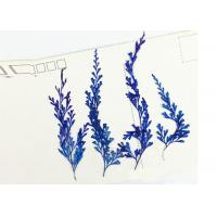 Buy cheap Fern Leaves Real Dried Flowers / Pressed Flower Framed Art 6 Different Colors product