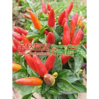Buy cheap Watch Fruit vegetables product
