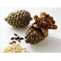 Chinese pine nuts