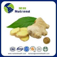 Standard Herb Extract Ginger Root Extract