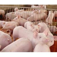 Buy cheap Veterinary medicine and animal health Non-antibiotic Growth Promotor product